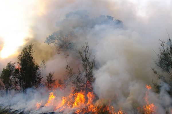 Bushfires: rural residents are the solution, not the problem