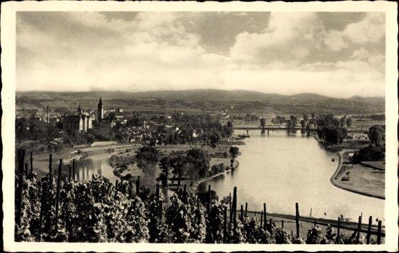 Ansichtskarte / Postkarte Litoměřice Leitmeritz Reg. Aussig, Panorama der Stadt, Weinanbau, Fluss