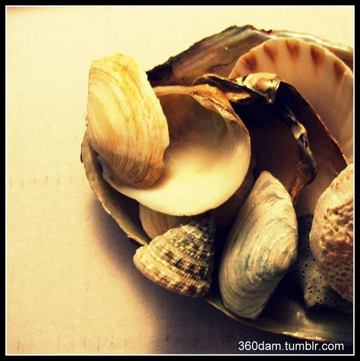 A collection of shells-souvenirs, ready for getting new look