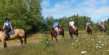 Even when I take a break from the leather shop, my passion for leather still creeps in even when on vacation.  I wrote about my horseback riding adventure in Nova Scotia when on family vacation. #Horsebackriding #HorseRiding #Buckles #DRings #Saddles #Horses