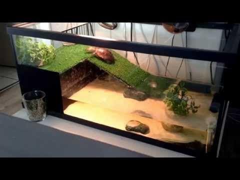 Plongeon de tortue d'eau - YouTube
