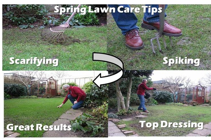 early spring lawn care tips - 736×488
