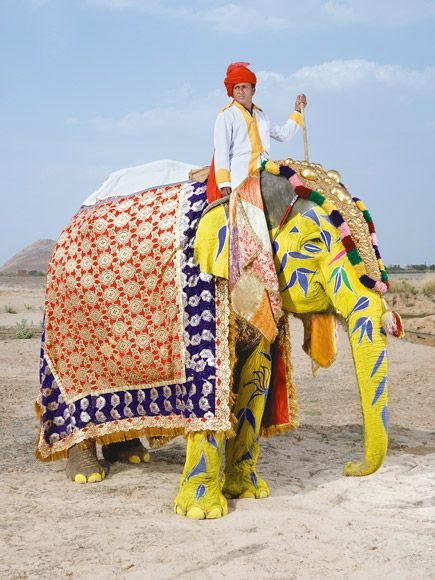 The stars of Jaipur's elephant festival photographed by Charles Fréger