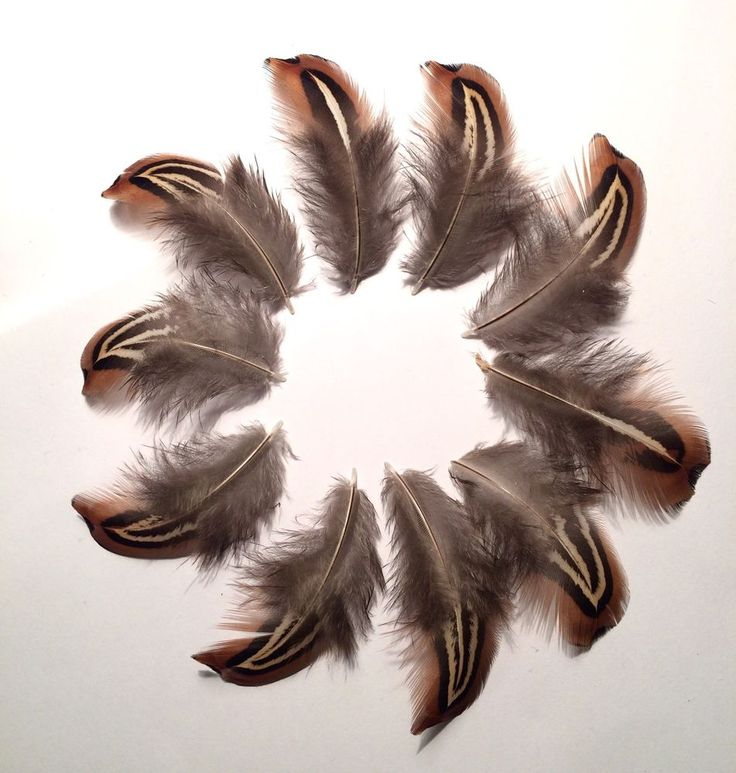 10 x Natural Brown Black Cream White Cock Pheasant Craft Feathers 3-5cm Striped