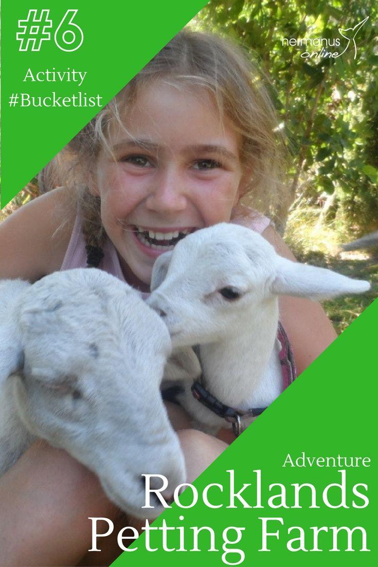 #6 / 10 - Hermanus Activity Bucketlist:  Rocklands Petting Farm