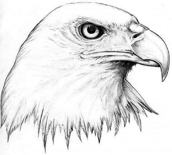 Tattoo Vorlagen 60 Kostenlose Tiermotive Tattoovorlagen Tattoos Zenideen Adler Zeichnung Skizzen Von Tieren Zeichnung Ideen Bleistift