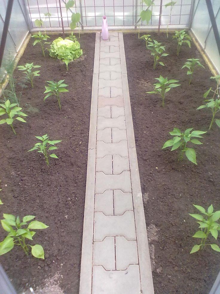 Už se zasadily papriky a okurky hadovky.
