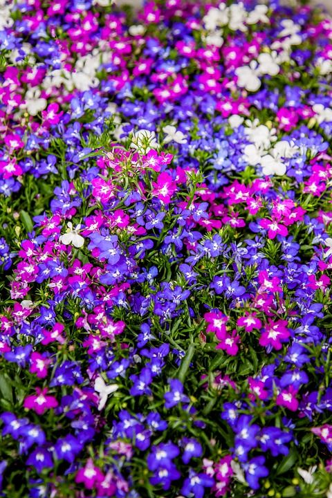Reliable Plants for Hanging Baskets