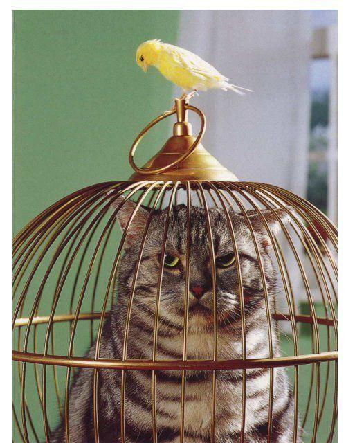 cat 猫 interior インテリア Venez jeter un coup d'oeil sur ça !!! drole d'animaux !!!