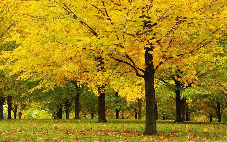 cores do outono 2