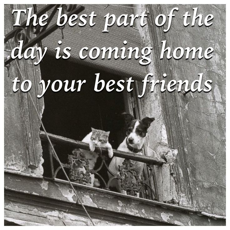 Best Part Of The Day Quotes: 17 Best Images About Dog Quotes On Pinterest