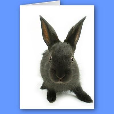 black rabbit cards