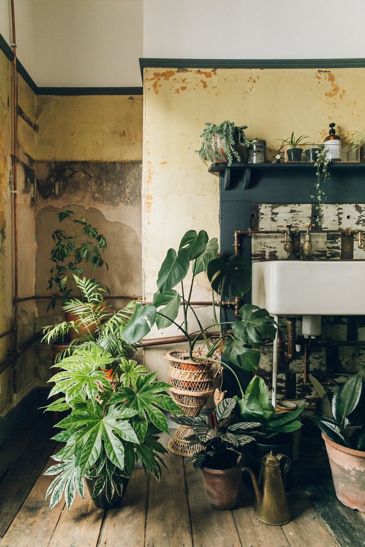 18 best Green Living images on Pinterest | Air cleaning plants ...