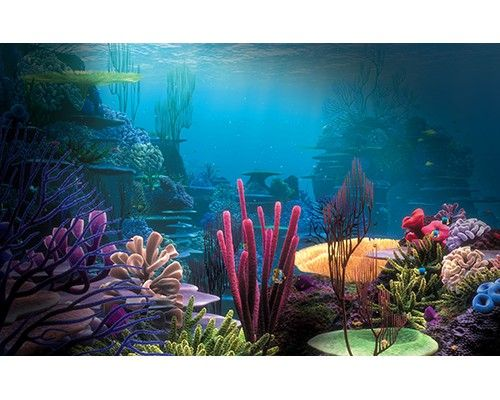 Under Water Cling On Aquarium Background