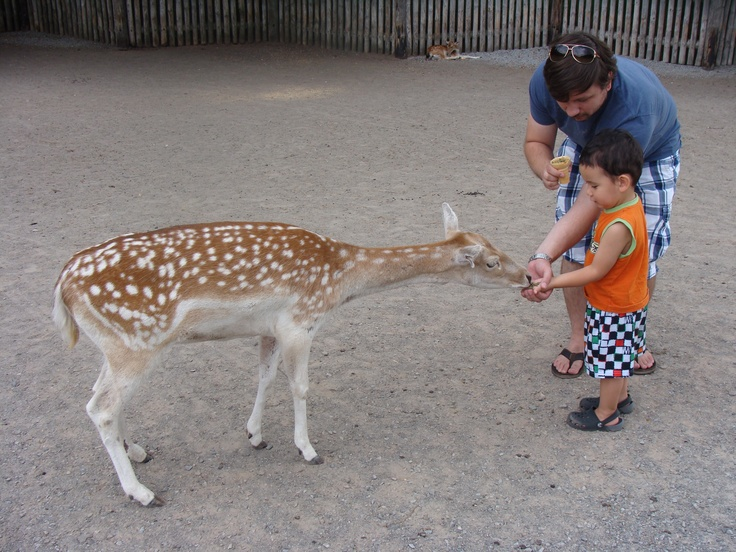 Deer Feeding at Marineland- Niagara Falls, ON. One of my most traumatic childhood memories involves these deer and a straw...lol