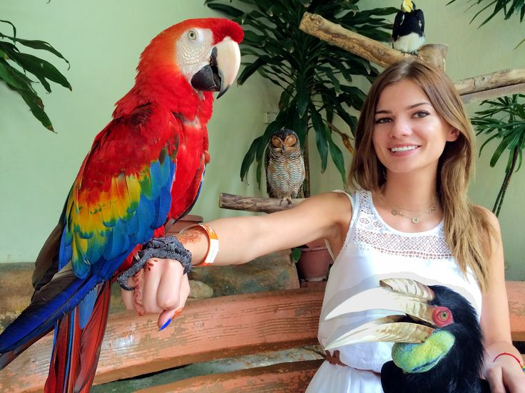 Kuala Lumpur, Malaysia Birds, Hornbill, weekend, tips, adventure