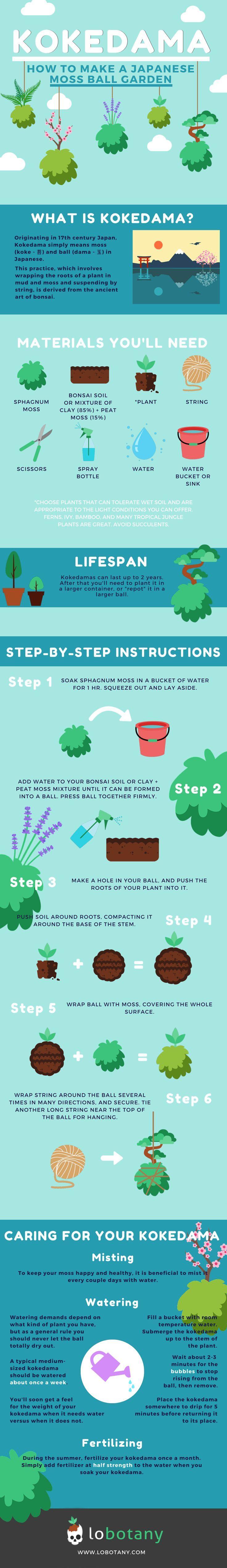 Wie man einen Kokedama oder japanischen Moosballgarten macht. Einfaches Heimwerken für