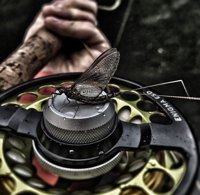 Stop what your doing, grab your Enigma, and go FLY FISHING! www.taylorflyfishing.com #passionforthewater #flyfishing
