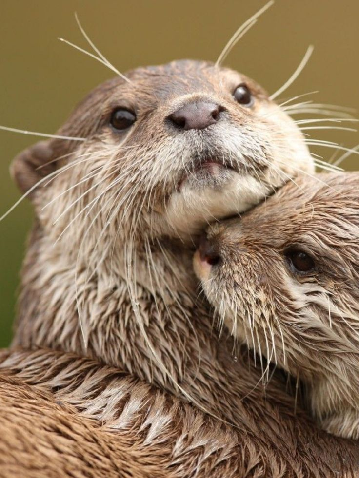 20 best images about Sea Otters
