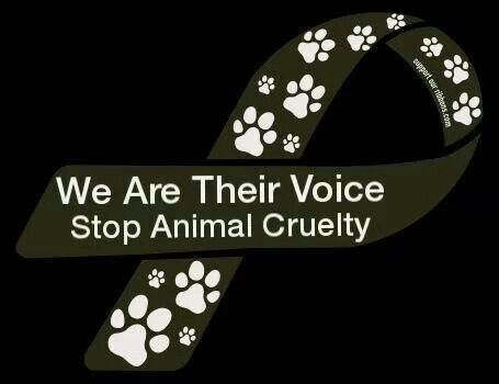 Stop Animal Cruelty Quotes