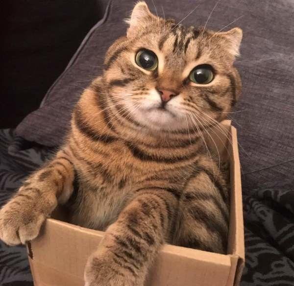 猫を動物病院に連れていく頻度は 年代別で通院タイミングを解説 ねこのきもちweb Magazine 猫 ねこ 動物