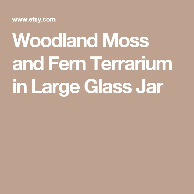 Woodland Moss and Fern Terrarium in Large Glass Jar