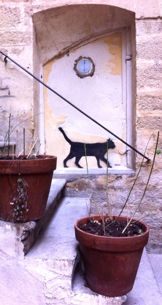 Le Chat #9... jardine mais ça l'intéresse pas plus que ça