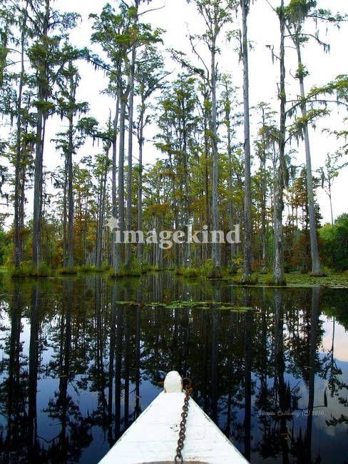 17 Best Images About Art Swamp Scenes On Pinterest Vests Stills For Sale And Herons