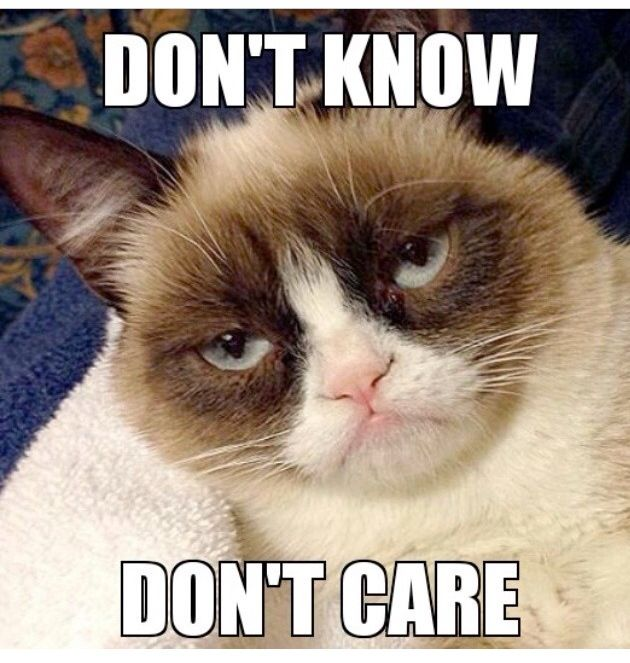 The 40 Funniest Grumpy Cat Movie Memes - 40. How Much Is This ...