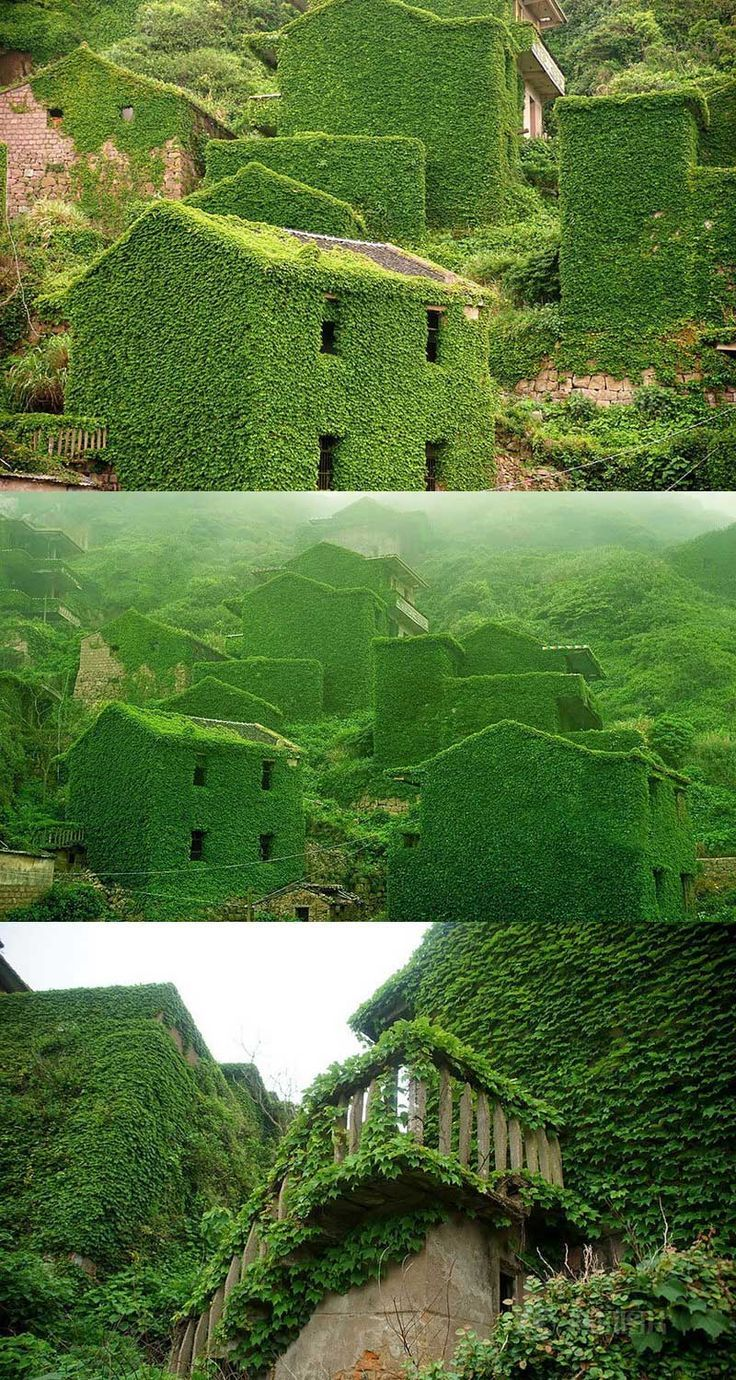 Abandoned Village in China overtaken by Nature. Shengsi Archipelago is a famous tourist destination located at China's Yangtze River. Plan a trip to China with the World's Smartest Trip planner http://triphobo.com