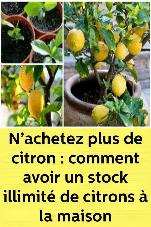 N'achetez plus de citron : remark avoir un inventory illimité de citrons à la maison