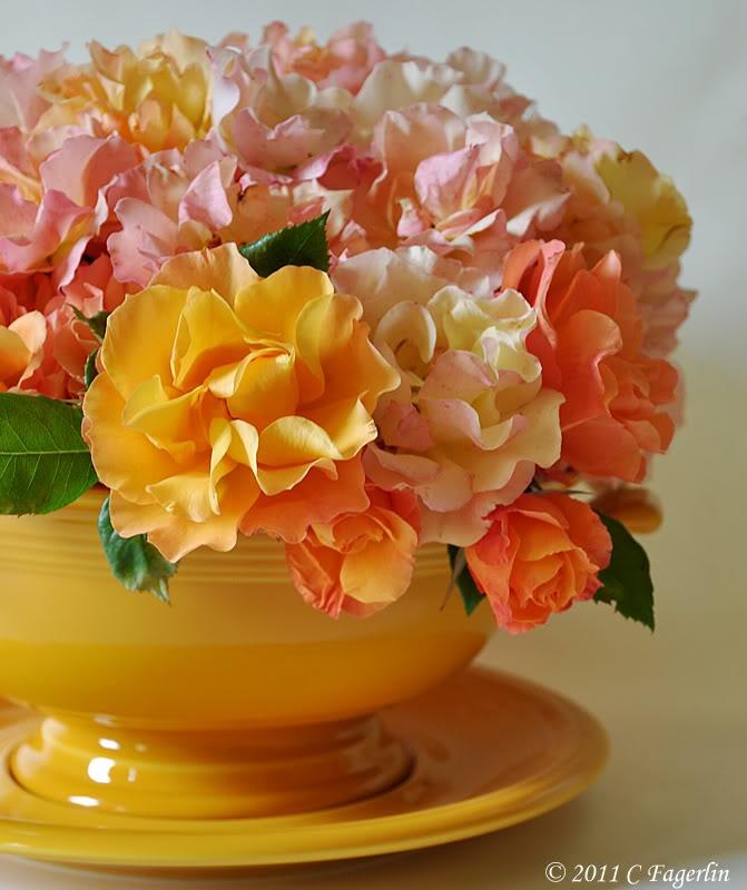 .: Rose, Arrangements Flowers, Flowers Flowers, Flowers Fetish, Beautiful Flowers, Fresh Flowers