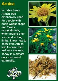 Richard Whelan ~ Medical Herbalist ~ Arnica
