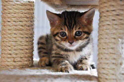 kitten!: Kitty Cats, Cute Baby Animals, Favorite Pets Animals, Adorable Animals, Posts, Kitties, Kittens Cats, Photo