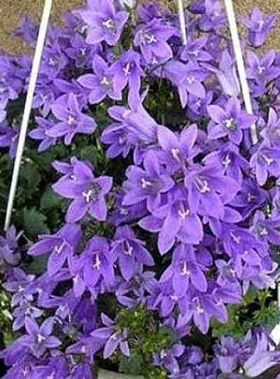 Una gran receta para que tus plantas luzcan geniales. #fertilizante #abono #plantas