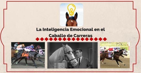 La inteligencia emocional en el caballo de carreras Blog AQHA Caballo de Carreras Caballos caballos inteligentes Inteligencia emocional equina Inteligencia en Caballos de Carreras StallionMexSearch