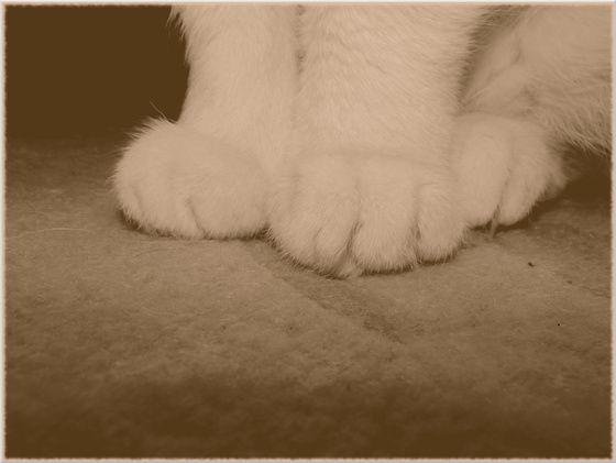#paw #cat