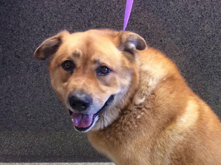 German Shepherd Dog dog for Adoption in pomona, CA. ADN-605539 on PuppyFinder.com Gender: Male. Age: