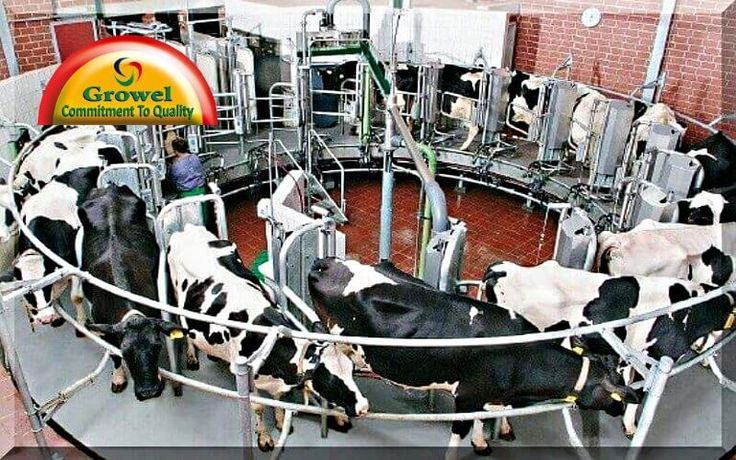how to start a dairy farming business in hindi