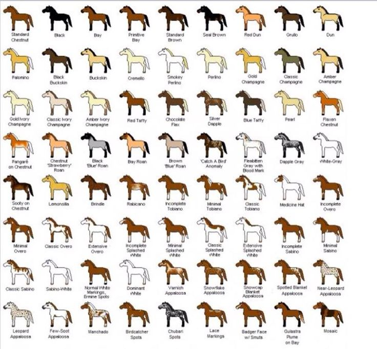 Horse color variations
