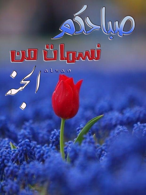 Pin By Alwan Alhamdani On صباح الخير Good Morning Good Night Morning Images Morning Greeting