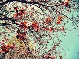 Resultado de imagem para wallpaper iphone tumblr vintage
