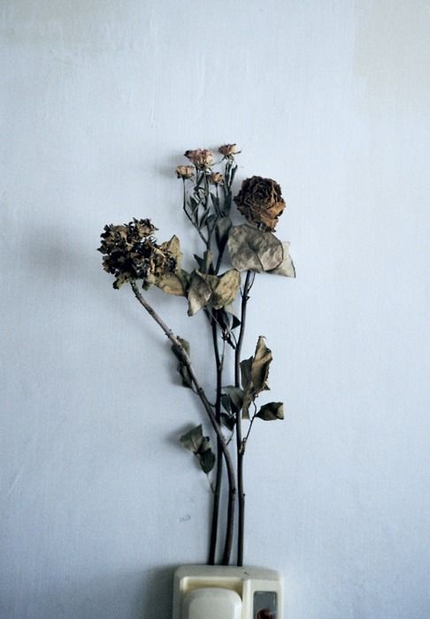 i think dead flowers are so pretty sometimes