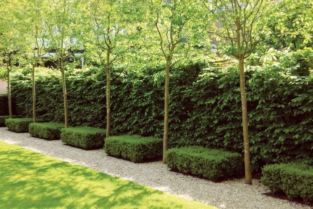 London hedges A petite urban oasis in St. John's Wood, London, designed by del Buono Gazerwitz, uses a green fence to ensure privacy while creating the illusion of space. The layering of heights, colors, and textures—hornbeam hedge overlaid with Amelanchier 'Robin Hill' trees and clipped box topiaries—adds visual interest while providing a clever way to get around fence height restrictions.
