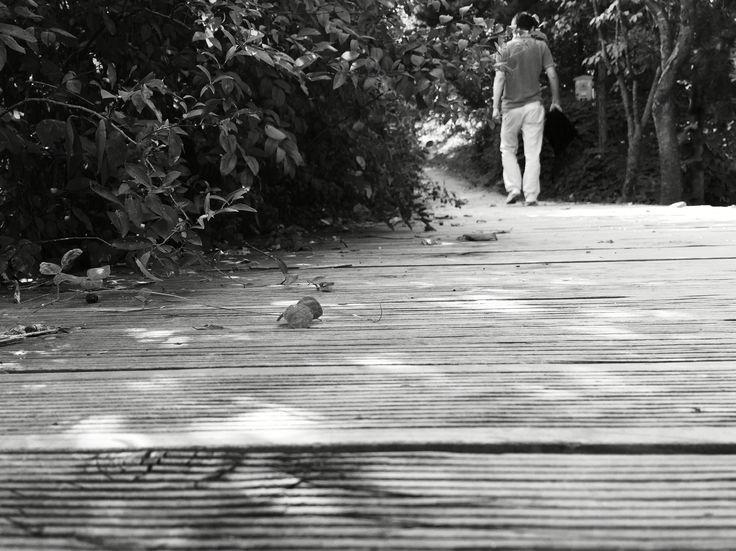 산책 길.