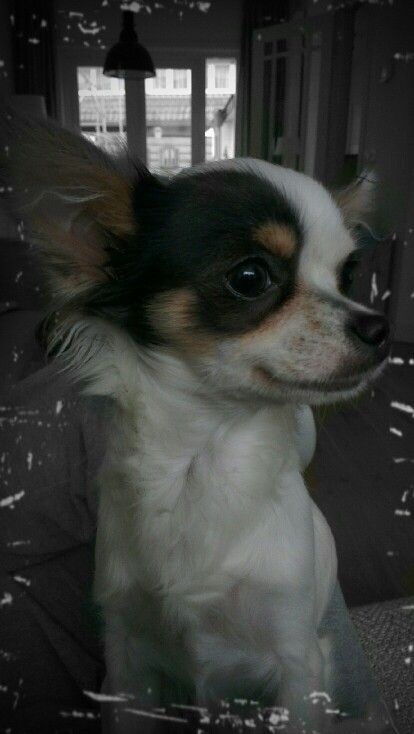 Roos 8 maanden oud.