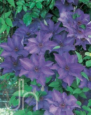 85 best flowers images on pinterest flower gardening. Black Bedroom Furniture Sets. Home Design Ideas