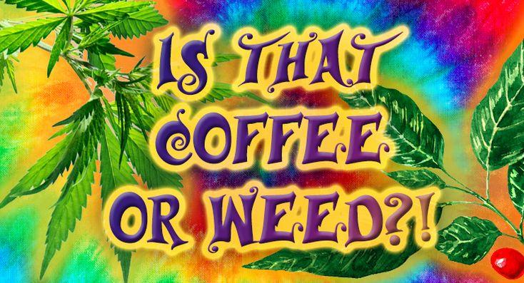 Quiz: Coffee Variety Or Cannabis Strain http://sprudge.com/quiz-coffee-variety-or-cannabis-strain-118383.html