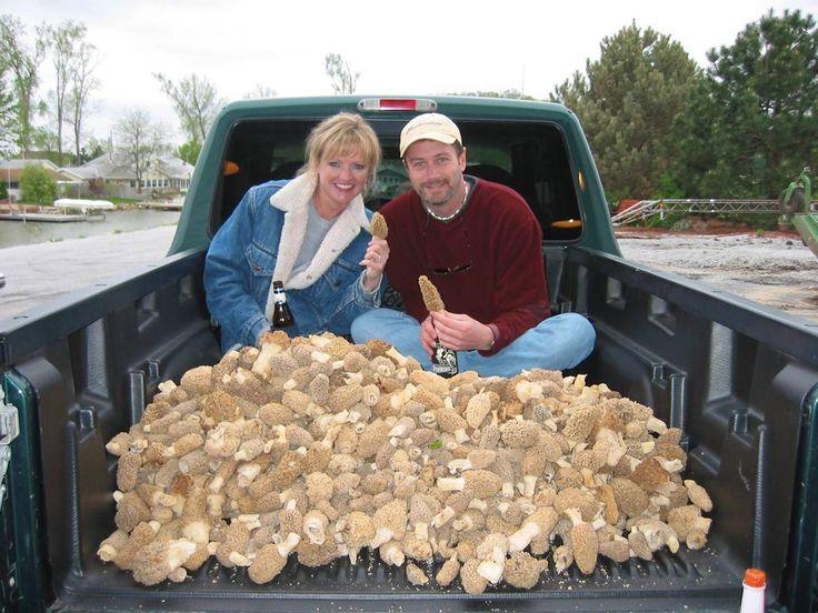 31 Best Morels Images On Pinterest Fungi Mushroom