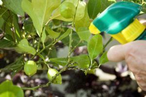 10 remedios caseros para eliminar plagas en tus plantas